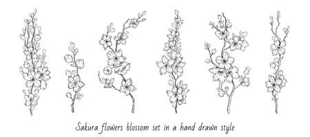 Sakura flowers blossom set, hand drawn line ink style. Cure doodle cherry plant vector illustration, black isolated on white background. Realistic floral bloom for spring japanese or chinese holiday