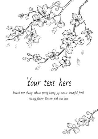 Conjunto de flor de flores de Sakura, estilo de tinta de línea dibujada a mano. Cure doodle ilustración de vector de planta de cerezo, negro aislado sobre fondo blanco. Floración floral realista para la primavera de vacaciones japonesas o chinas