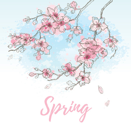 Watercolor spring sakura flowers blossom on sky blue background, hand drawn art set. Cute oriental painted cherry plant. Vector illustration, isolated on white with text Spring