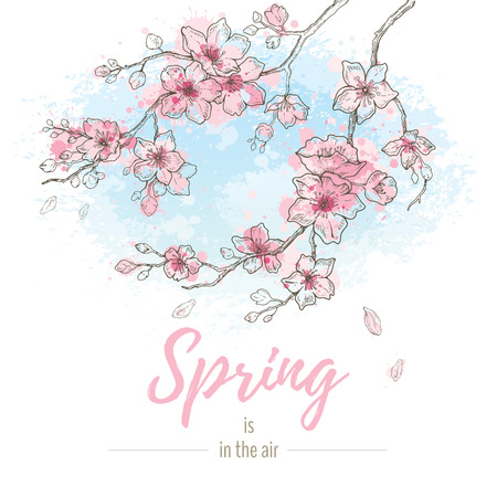 Watercolor spring sakura flowers blossom on sky blue background, hand drawn art set. Cute oriental painted cherry plant. Vector illustration, isolated on white with quote slogan - Spring is in the air Illustration