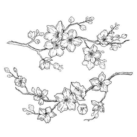 Conjunto de flor de flores de Sakura, estilo de tinta de línea dibujada a mano. Ejemplo lindo del vector de la planta de la cereza del doodle, negro aislado en el fondo blanco. Floración floral realista para la primavera de vacaciones japonesas o chinas