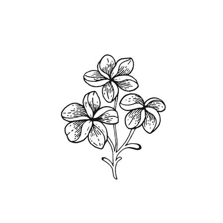 Fleur tropicale de frangipanier d'été. Plante exotique de plumeria, style vintage dessiné à la main. Illustration vectorielle de Doodle isolé blanc. Dessin au trait tendance pour livre de coloriage, impression de t-shirt, conception de cartes, logo, impression