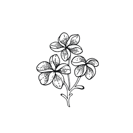 Summer Frangipani tropic flower. Exotic plumeria plant, hand drawn vintage style. Doodle vector illustration isolated white. Trendy line art for coloring book, t-shirt print, card design, logo, print