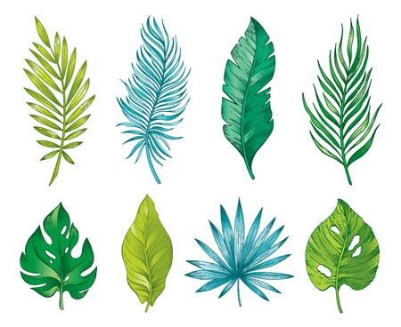 Palm tropical leaf branch, hand drawn watercolor set. Exotic jungle forest tree icon, banana, monstera, areca. Realistic rainforest vector illustration isolated white background. Color line art sketch
