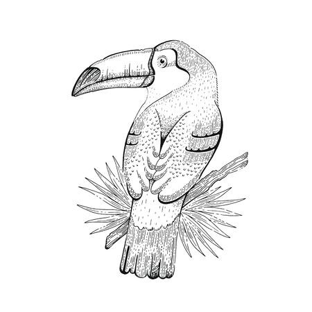Toco toucan bird, tropical american wild animal. Outline art for tattoo, coloring book, t-shirt print, logo design. Cool trendy vector illustration, black ink hand drawn sketch. Isolated on white