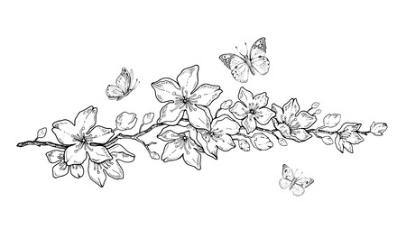 Cherry flower blossom, botanical art. Spring almond, sakura, apple tree branch, hand draw doodle vector illustration. Cute black ink art, isolated on white background. Realistic floral bloom sketch. Vector Illustratie
