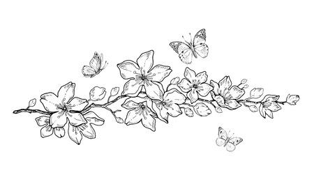 Kirschblütenblüte, botanische Kunst. Frühlingsmandel, Sakura, Apfelbaumzweig, Hand zeichnen Doodle-Vektor-Illustration. Nette schwarze Tintenkunst, lokalisiert auf weißem Hintergrund. Realistische Blumenblütenskizze. Vektorgrafik