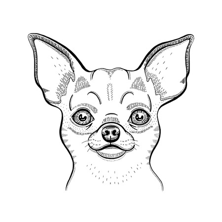 Cute chihuahua t-shirt print design. Cool animal vector in doodle hand drawn style for tee, child, baby poster, coloring book, print in ipster style. Line fashion illustration isolated on white Zdjęcie Seryjne - 122879894
