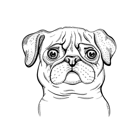Cute Pug dog t-shirt print design. Cool animal vector in doodle hand drawn style for tee, male, female fun apparel. Puppy character poster with hipster element. Fashion illustration isolated on white  イラスト・ベクター素材