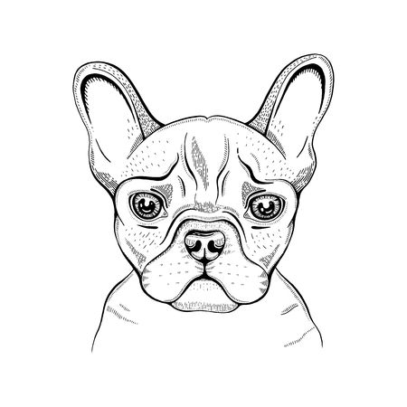 Cute bulldogdog t-shirt print design. Cool animal vector in doodle hand drawn style for tee, child, baby poster, coloring book, print in ipster style. Line fashion illustration isolated on white