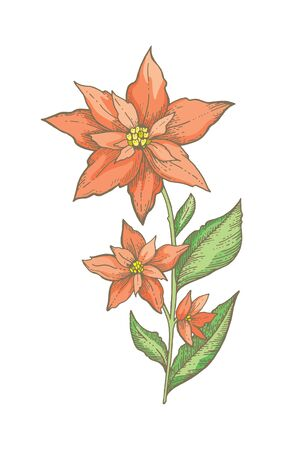 Christmas poinsettia flower branch. Hand drawn sketch. Holiday plant, red tree vector illustration Merry xmas, Happy new year design element.