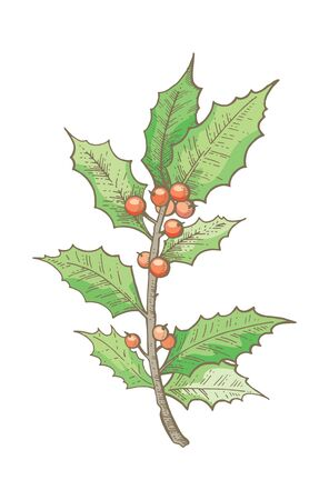 Holly branch, Christmas decoration icon. hand drawn sketck. Merry xmas Happy new year design element.