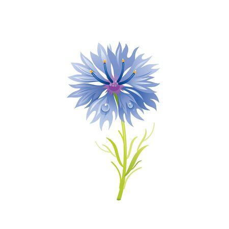 Cornflower flower, floral icon. Realistic cartoon cute plant blossom, spring, summer garden symbol.