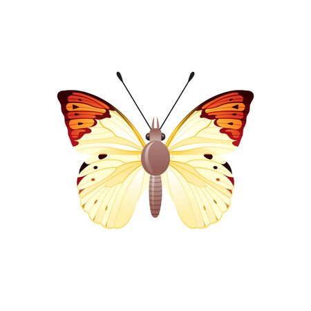 Butterfly icon. 3d realistic butterfly insect with beautiful orange yellow color wings. Animal sign for logo design, poster, t-shirt print, banner. Vector illustration isolated on white background Stock fotó - 132932174