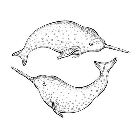 Narwhal unicorn sketch. cute vector whale. Cartoon sea illustration, doodle vintage fish with horn in engraving style. Undersea mascot set with unique swimming animals. Magic hand drawn narwhals set 向量圖像