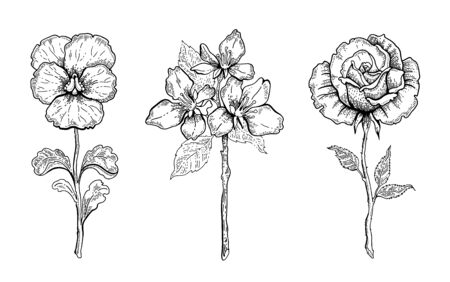 Flower set. Pansy, Cherry blossom, rose. Vector floral graphic, sketch plant illustration. Black and white vintage line art. Spring or summer hand drawn flowers. Botanical engraved style collection