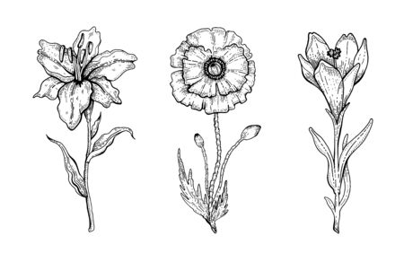 Flower set. Lily, Poppy, Crocus. Vector floral graphic, sketch plant illustration. Black and white vintage line art. Spring or summer hand drawn flowers. Botanical engraved vintage style collection