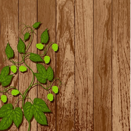 Hop vine on a wooden wall  Vector   vine on a wooden wall  Vector
