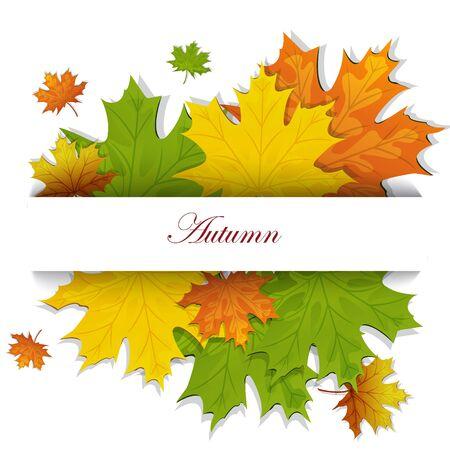 autumn maple leaves Stock Vector - 15351101