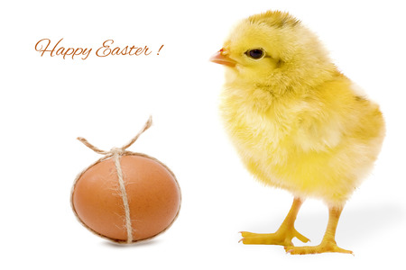 Easter card with egg and chicken photo