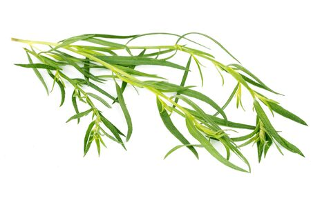 Tarragon herbs isolated on white background