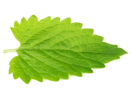 isolated on white: Green mint leave isolated on white background Stock Photo