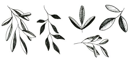 Floral doodle set of leaves isolated on white background. Collection of elements for design, bullet journal, scrapbooking. Monochrome illustrations in sketch style.