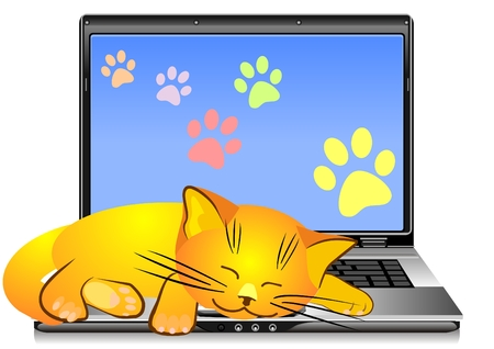 cat open: orange cat asleep on the keyboard open silver laptop on a white background