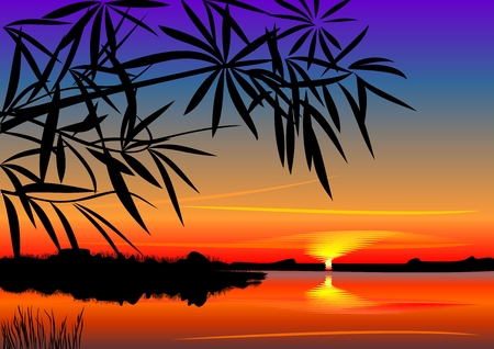 vector bright colorful sunset over the lake in the foreground silhouettes of plants Illustration