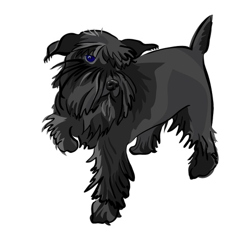 vector dog breed Miniature Schnauzer black Vector