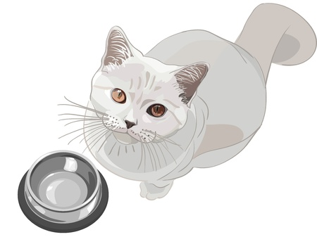 empty bowl: British lilac cat sits in front of an empty bowl and looks up Illustration