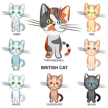 de Britse korthaar katten van verschillende kleuren: zwart, wit, tabby, tortoieseshell, Lila; blauw; rood; chocolade