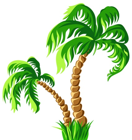 palm tree isolated: tropical  two palm trees isolated on a white background