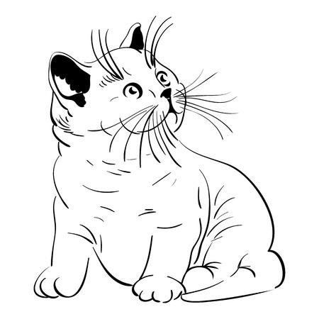 schets van een kleine Britse Korthaar kittens stamboom zitten en kijken met verbazing naar