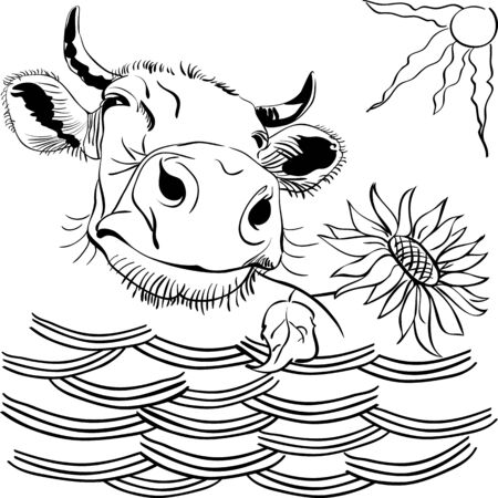 peering: Black and white image: funny cow peering over wattle and chewing sunflower.