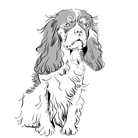 image of the dog breed Cavalier King Charles Spaniel Stock Vector - 10240412