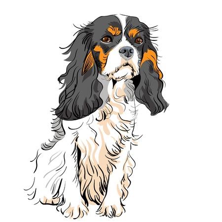 부드러운 털의: 강아지의 이미지는 무심 한 킹 찰스 스패니얼 품종