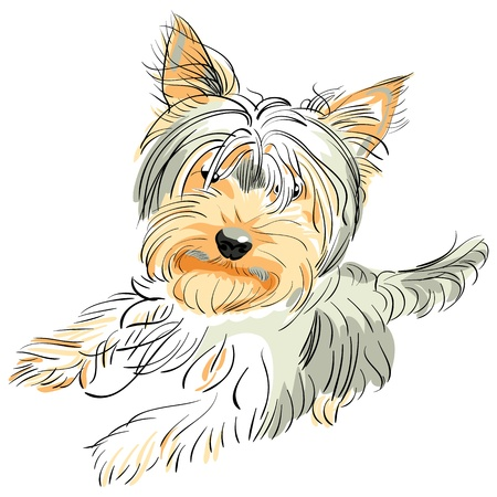 color sketch Yorkshire terrier red and black stands on its hind legs Illustration
