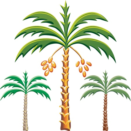 three leaves: set of the date palm trees, Various color options Illustration