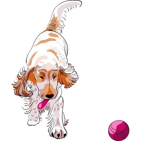 lengua larga: Esbozo de una raza de perro rojo cocker Spaniel corre y juega con una bola roja Vectores