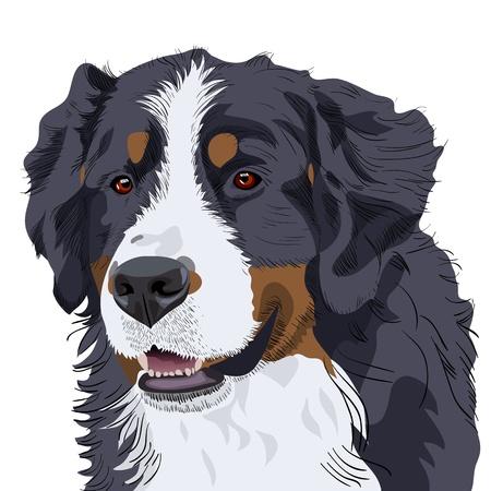 순 혈종의: 근접 강아지 품종 Bernese 산 컬러 스케치
