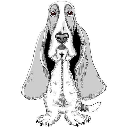 basset: croquis de la raza de perro Basset Hound sentado