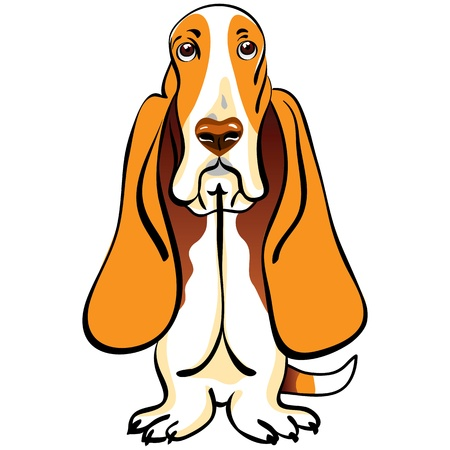 hound: color sketch of the dog Basset Hound breed sitting