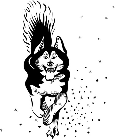 alaskan malamute: black and white sketch of a sled dog Alaskan malamute running in the snow tongue hanging out