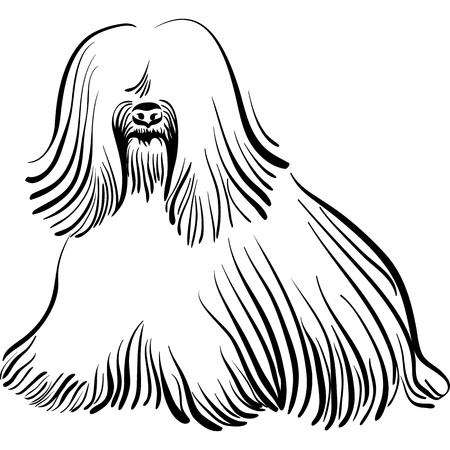 tibetan: sketch of the dog Tibetan Terrier breed sitting Illustration