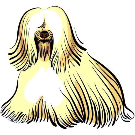 longhaired: color sketch of the dog Tibetan Terrier breed sitting