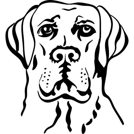 黒と白のスケッチの深刻な犬のクローズ アップの肖像画ラブラドル ・ レトリーバー犬を品種します。  イラスト・ベクター素材