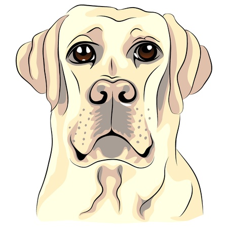 vector color sketch dog breed white labrador retrievers closeup Vector
