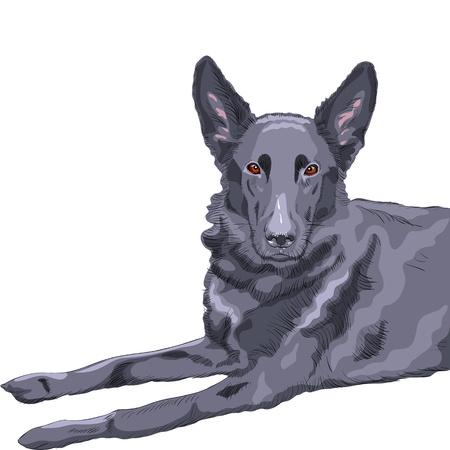 close-up portrait of a dog German shepherd breed