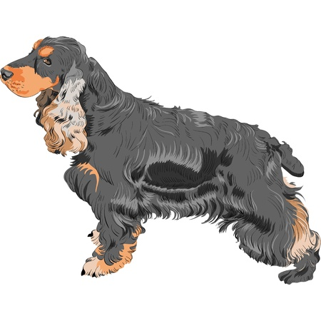 dog breeds: color sketch black English Cocker Spaniel breed isolated in white background